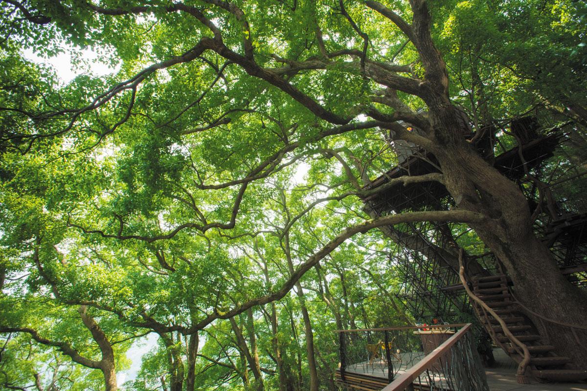 森の空中基地 くすくす 樹齢300年以上のくすのきの上に佇むツリーハウスや樹上アスレチックが広がる森。ツリーハウス制 作者は、ツリーハウスクリエーターの第一人者ー小林崇氏。ひとたび足を踏み入れれば幼い頃に憧れたトムソーヤの世界に迷い込んだ気持ちに。