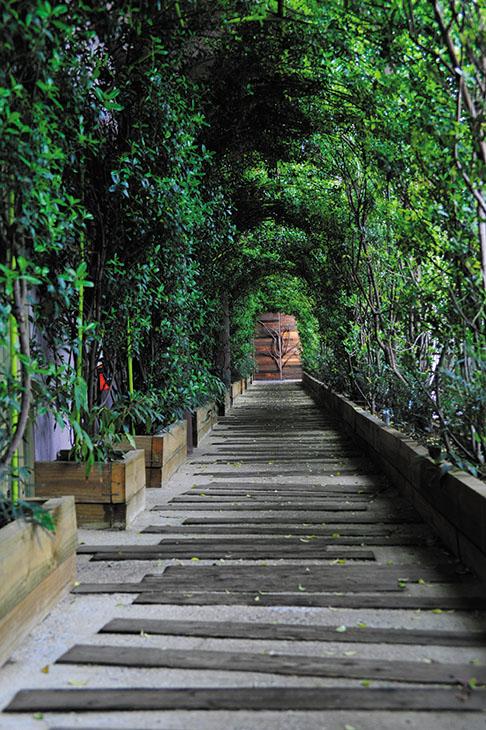 ホテルとツリーハウスは美しい緑の道で彩られる。マイナスイオンを全身に浴びよう