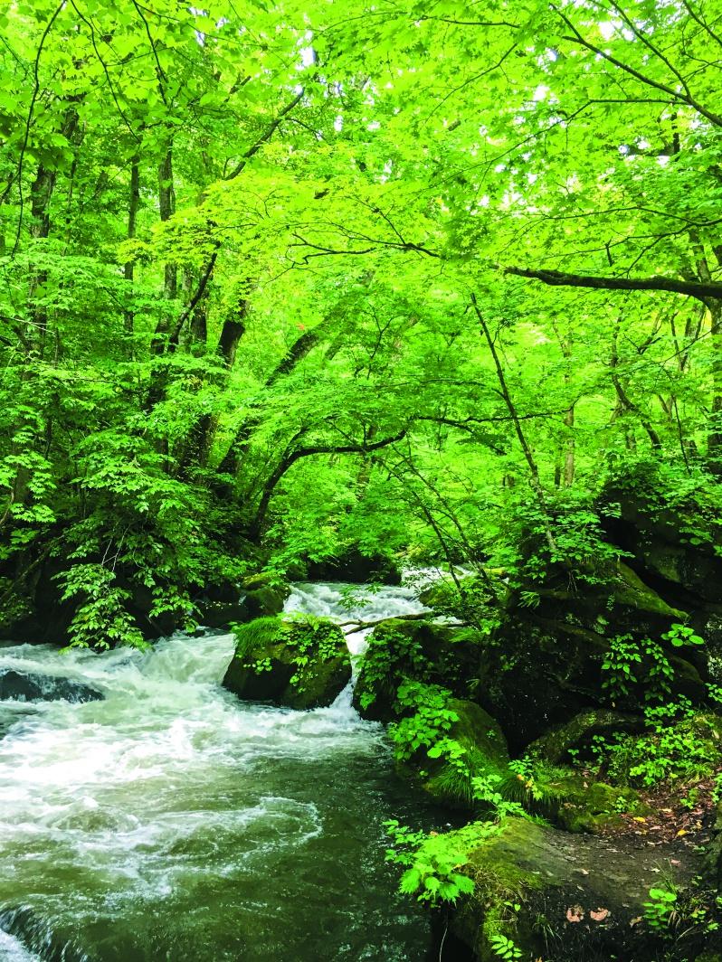 日本有数の景勝地、奥入瀬渓流。ガイドとともにミクロのアドベンチャーを楽しめる「苔さんぽ」他、これからの時期は「渓流フィッシング」や「星空鑑賞」なども楽しむ事ができる。